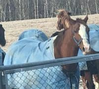 Horse Training in Hokkaido Hidake by  JRA