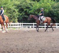 石狩での乗馬体験